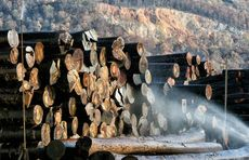 Two Log Purchasers - one for west Romania & one for Iasi area
