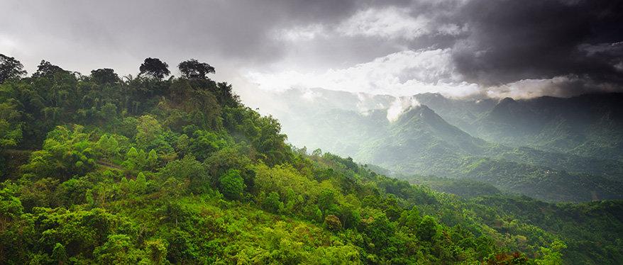 Nachhaltiges Tropenholz