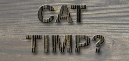 cookies_cat_timp_ro